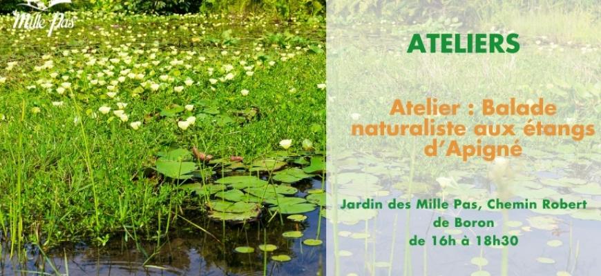 Atelier : Balade naturaliste aux étangs d'Apigné Atelier/Stage