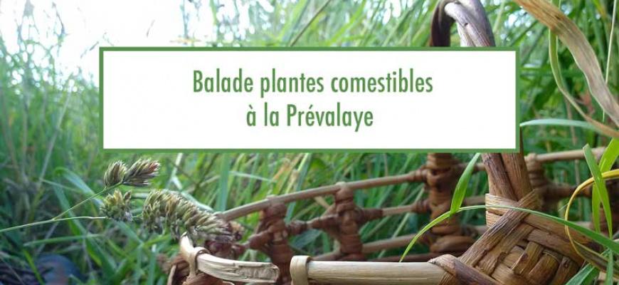 Balade découverte des plantes comestibles à la Prévalaye Atelier/Stage