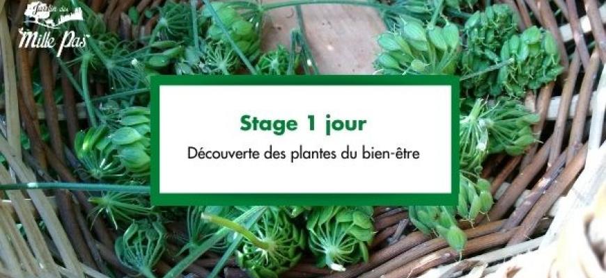 Stage 1 jour : Découverte des plantes du bien-être Atelier/Stage