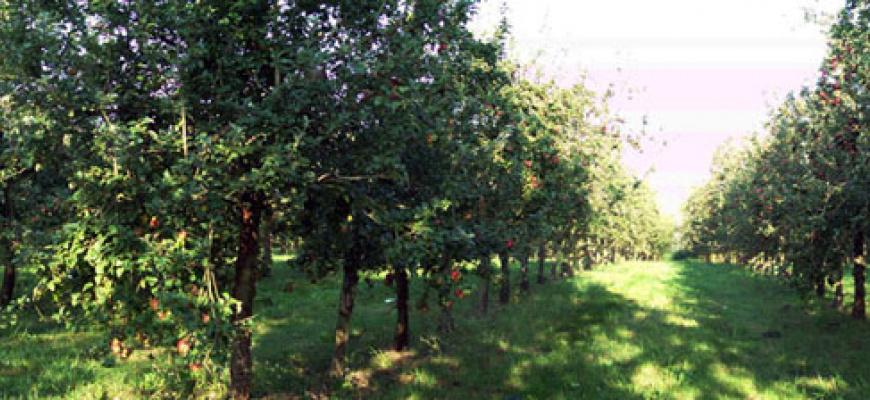 Visite des Vergers de l'Ille, ferme biologique cidricole Atelier/Stage