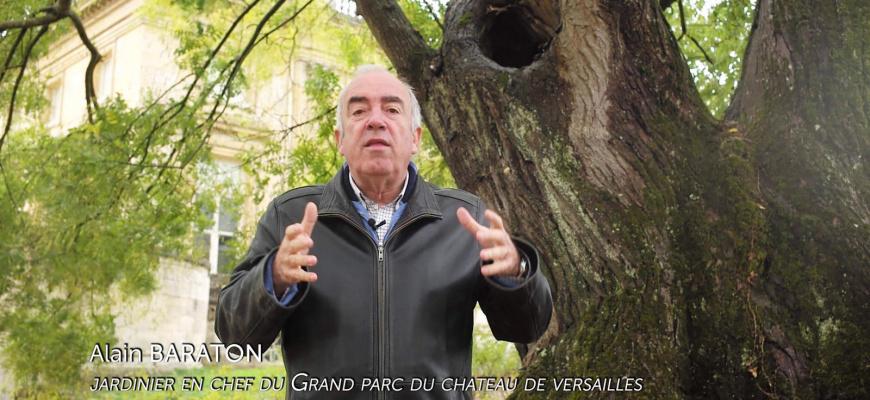 Les Arbres Remarquables, un patrimoine à protéger Documentaire