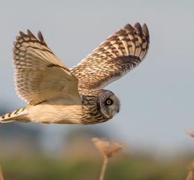 Oiseaux en toute liberté - Françoise et Michel Coquelle
