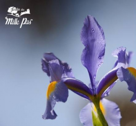 Image Atelier : les plantes, ressources du féminin sacré : naturopathie et herboristerie Atelier/Stage