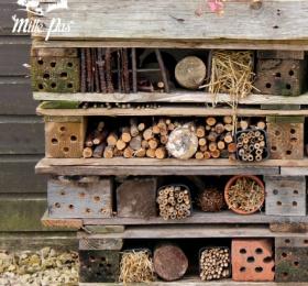 Image Atelier : Les incroyables abris à biodiversité au jardin Atelier/Stage