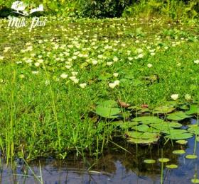 Image  Atelier : Balade naturaliste aux étangs d'Apigné Atelier/Stage