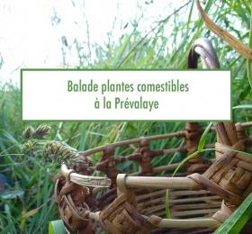 Image Balade découverte des plantes comestibles à la Prévalaye Atelier/Stage