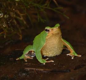 Biodiversité / humanité : quelle évolution ?