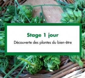 stage 1 jour : Découverte des plantes du bien-être