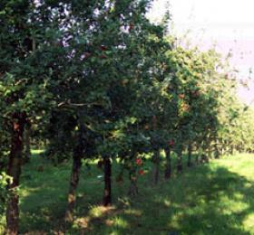 Visite des Vergers de l'Ille, ferme biologique cidricole