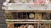 Atelier : Les incroyables abris à biodiversité au jardin