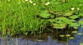 Atelier : Balade naturaliste aux étangs d'Apigné
