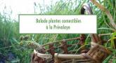 Balade découverte des plantes comestibles à la Prévalaye