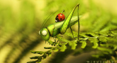 Festival Marmaille - Minuscule, La vie privée des insectes